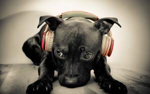 המוסיקה שלכם חייבת להיות בשירותי הסטרימינג