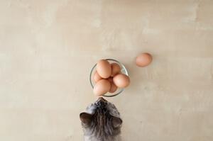 אסור, בשום פנים ואופן, לשים את כל הביצים בסל אחד